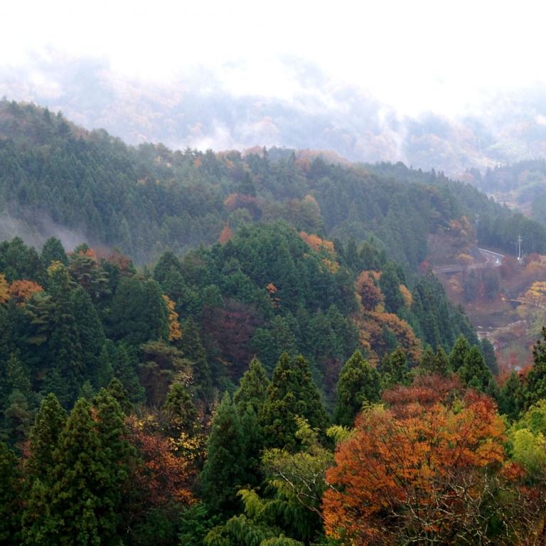 Накацугава осенью; Гифу