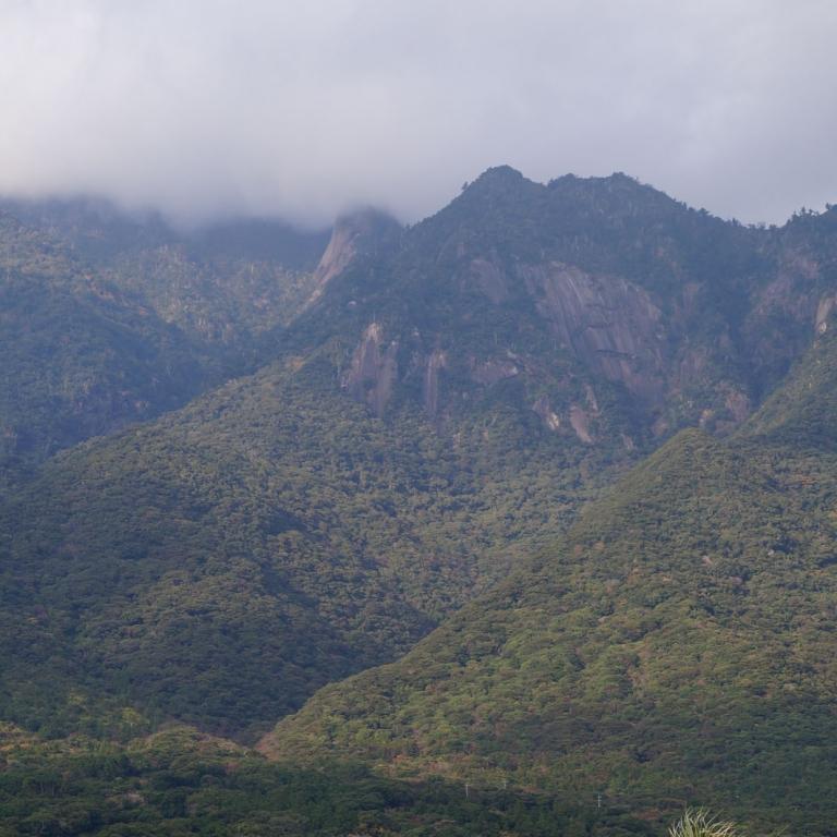 Бурная растительность южных гор - на острове Якусима; Кагосима