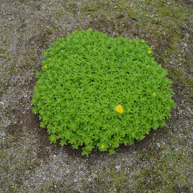 В цветочном парке высокогорья Юдзава; Ниигата