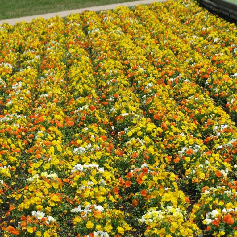 В цветочном парке Тоттори ХанаКайро; Тоттори