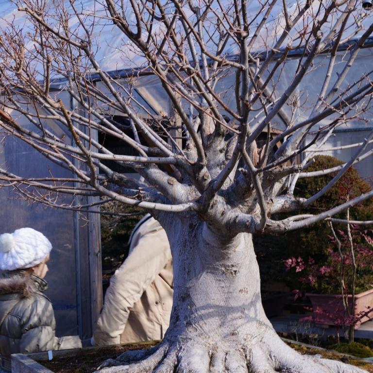 Бонсай в саду японского садового искусства; Сайтама