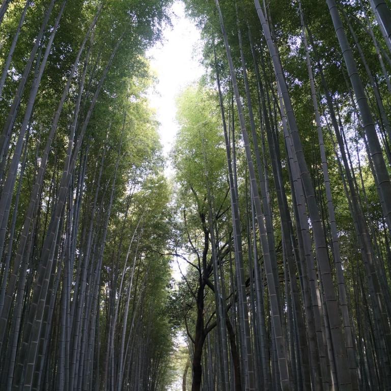 Бамбуковая дорожка; Киото