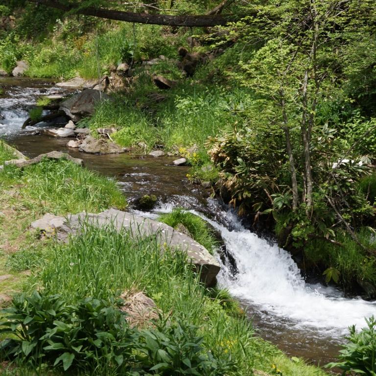 Лесной ручей; Нагано