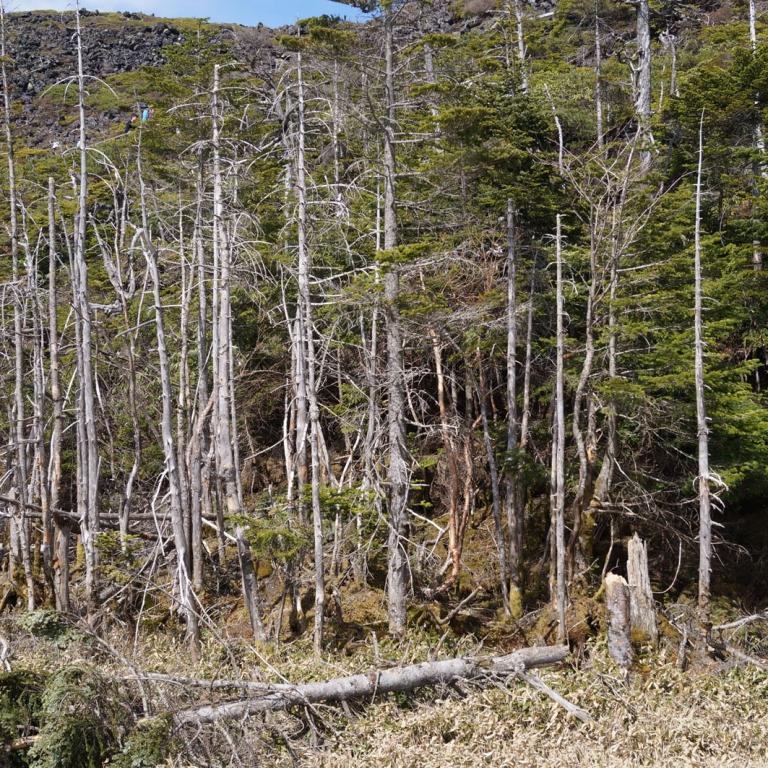 Западный склон хребта Яцугатакэ; Нагано