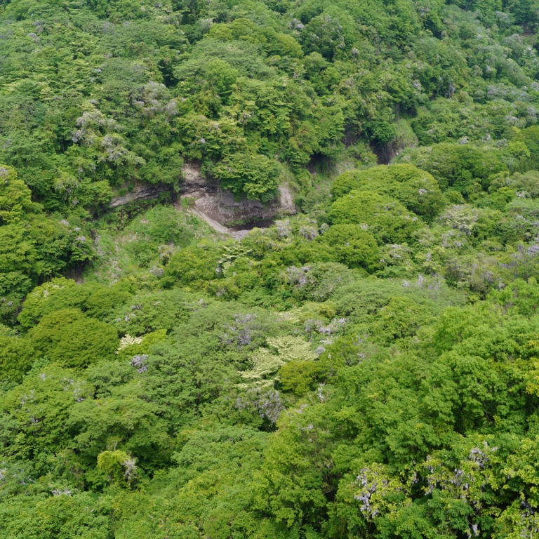 Горный лес в мае; Яманаси