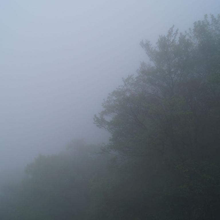Лес в тумане у подножья г.Насу; Тотиги