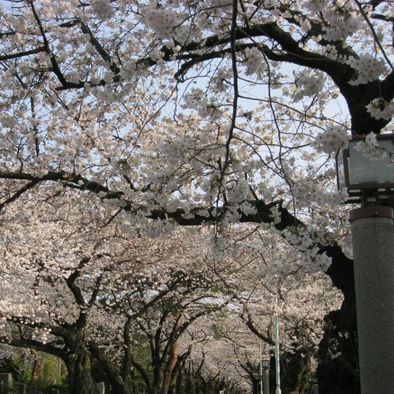 Кладбище Аояма; Токио