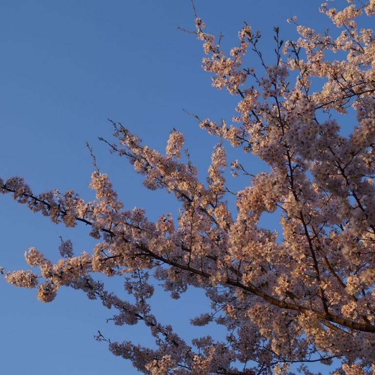 Ранним утром; Киото