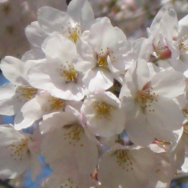 Начало апреля; Токио