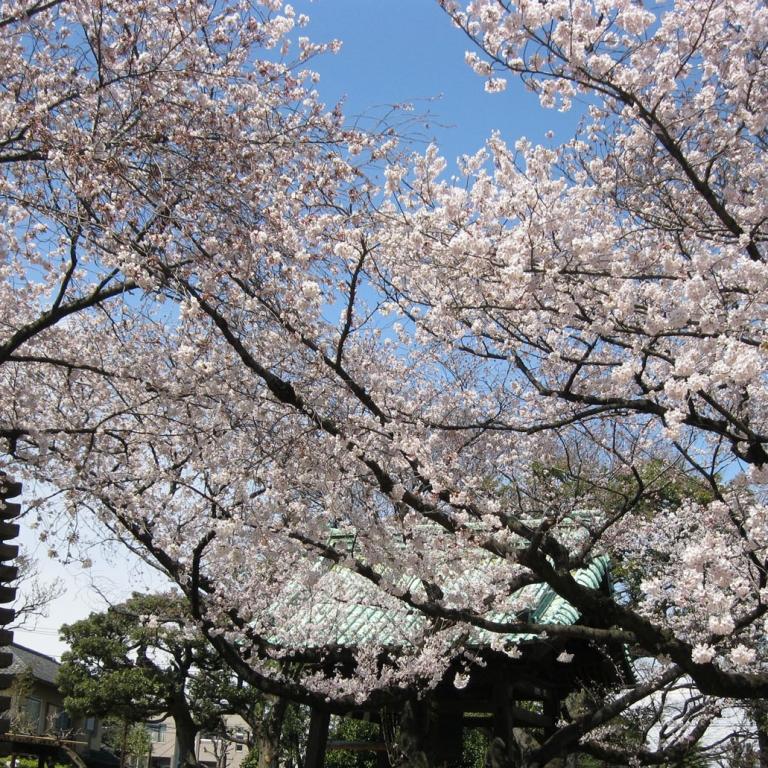 В храме ЮтэнДзи, Токио