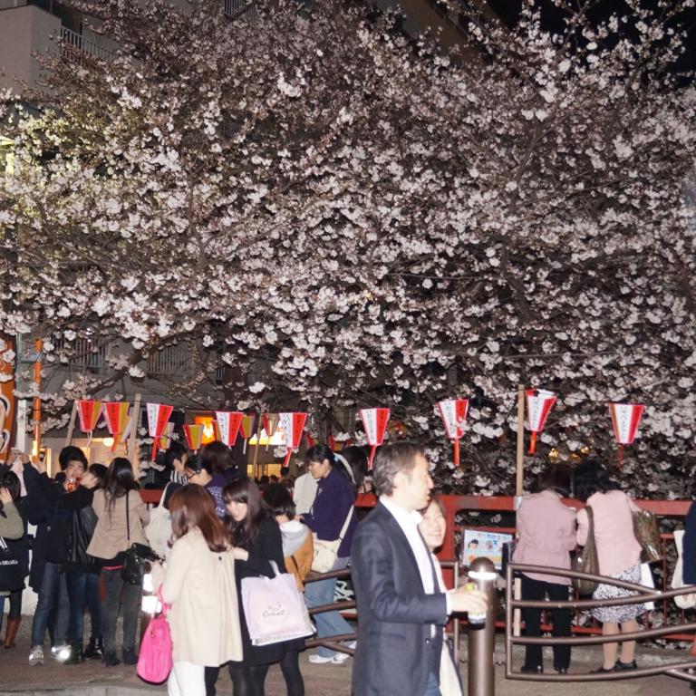 Любование вечерней сакурой; Токио