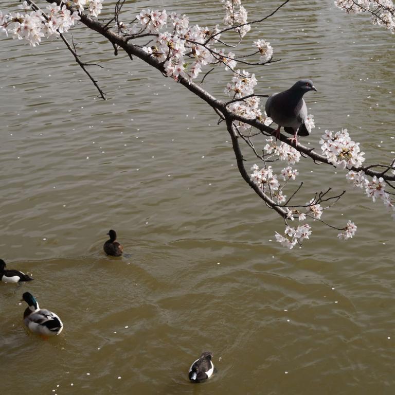 Пруд в парке Химонъя; Токио