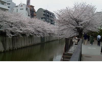Река Мэгуро в апреле; Токио