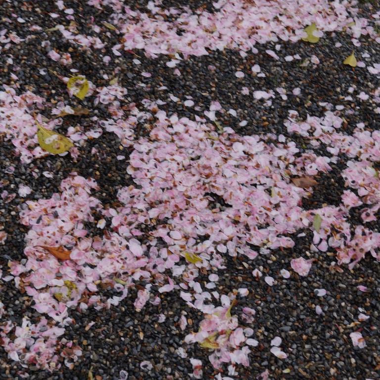 Опавшие цветы на земле; Киото
