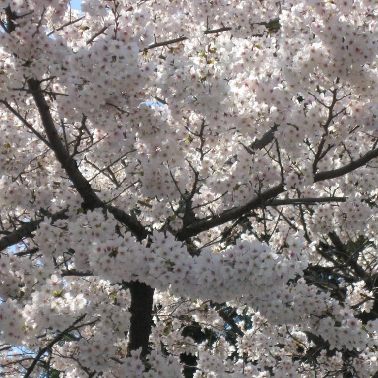 В одном из столичных парков; Токио