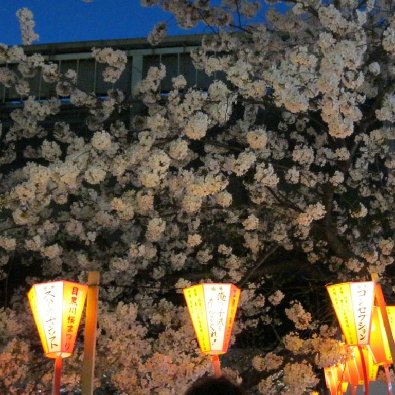 Гармония вечерних фонариков и цветов сакура; Токио
