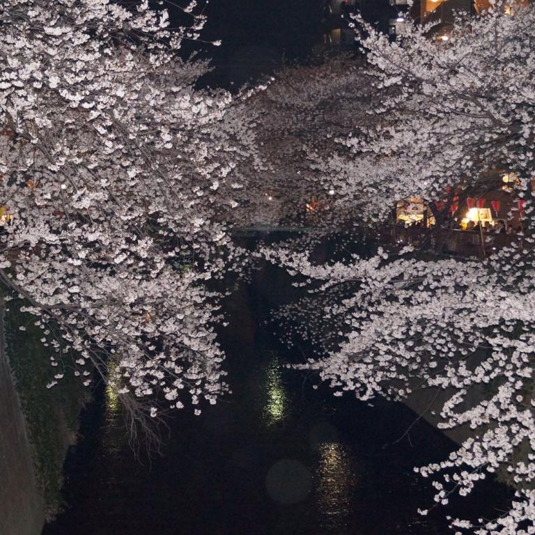 Река Мэгуро в окружении цветущих деревьев; Токио
